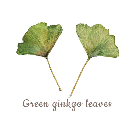 medical drawing: Botanical watercolor illustration of colorful ginkgo leaves on white background