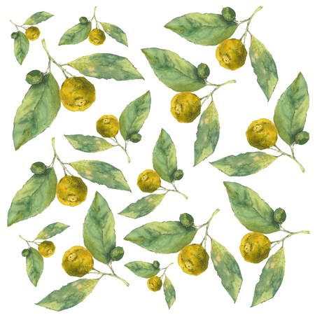 Clementines. Citrus on white background. Seamless watercolor pattern Stock Photo