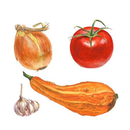 玉ねぎ、トマト、ニンニク、白背景にズッキーニの植物の水彩イラスト