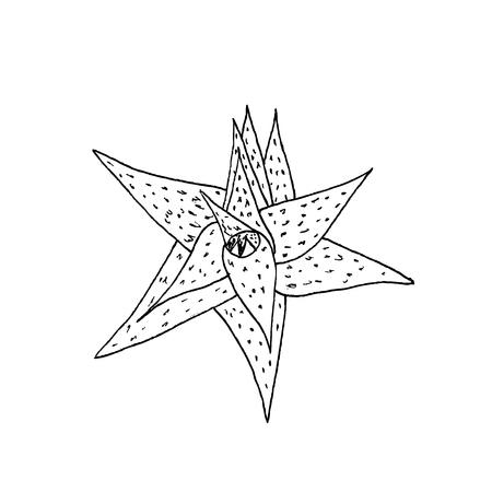 アロエの植物の葉。白の背景にベクトル画像