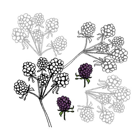 dewberry: Brambleberry. Liner vector illustration on white background