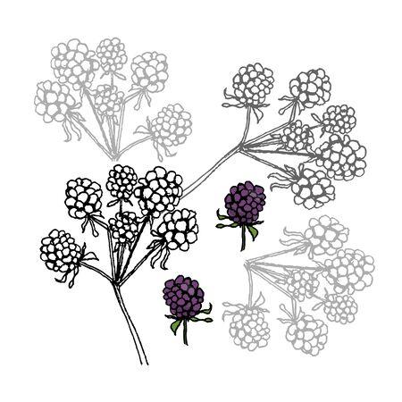 Brambleberry. Liner vector illustration on white background