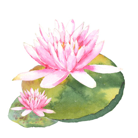 Botanical watercolor illustration of water lilies on white background