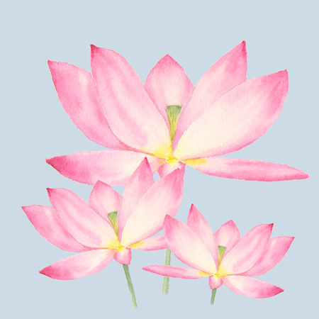 Botanical watercolor illustration of lotus flowers on blue background