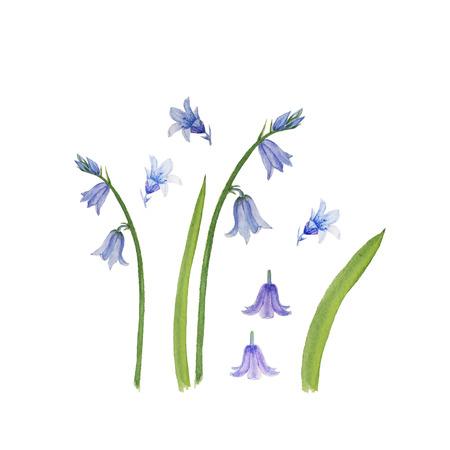 Flores de campana de acuarela conjunto aislado en blanco Foto de archivo - 89576903