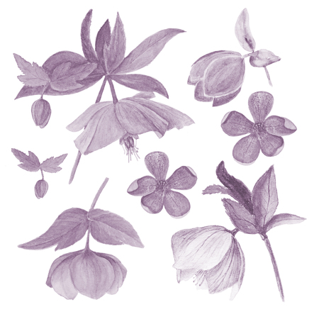 Set of watercolor botanical illustration of hellebores isolated on white background in cyanotype filter. Floral drawing for the greeting cards, invitations, personalized card and different decorations