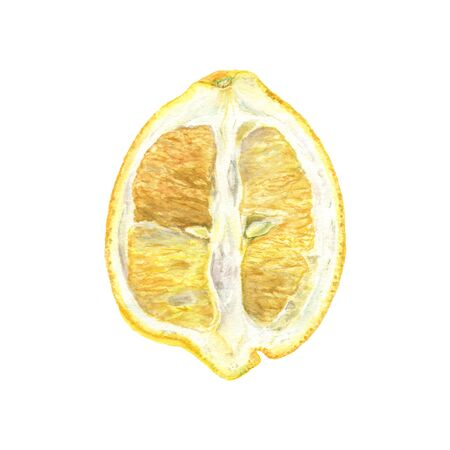 Botanical watercolor illustration of yellow lemon cut isolated on white background. Could be used as decoration for web design, polygraphy or textile