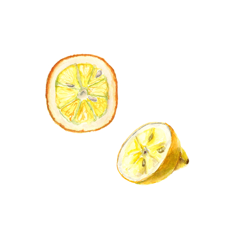 Watercolor illustration of cut lemon on white background