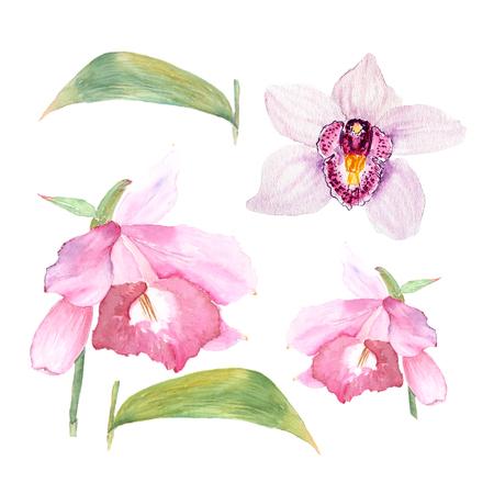 Botanische aquarel illustratie schets van cattleya bloem en orchidee op witte achtergrond. Als decoratie voor Webontwerp, schoonheidsmiddelenontwerp, pakket, textiel zou kunnen worden gebruikt