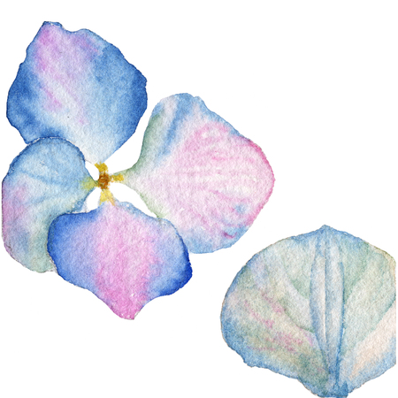 Collection of inflorescence Hydrangea, illustration in vintage watercolor style Stock Photo