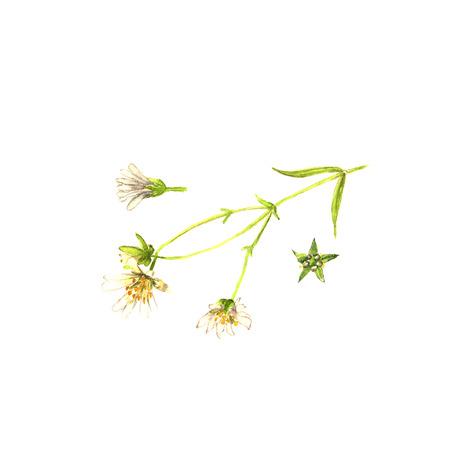 水彩緑の雑草。野生植物のシルエットの組成。