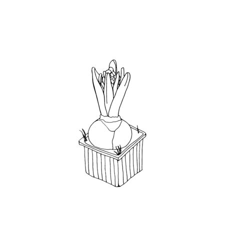 Vector hand drawn line art bulb pot with flowers.