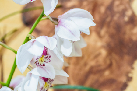 Branch of white orchid in sunlight on natural background