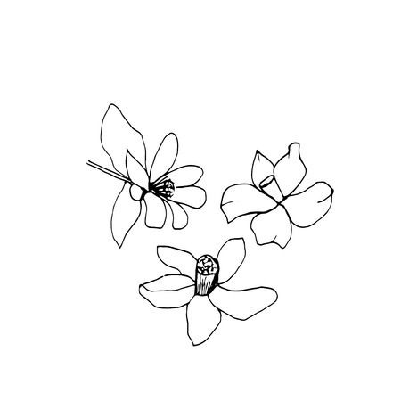 Graphic sketches branches Neroli. Illustration for greeting cards and other printing and web projects. Vektoros illusztráció