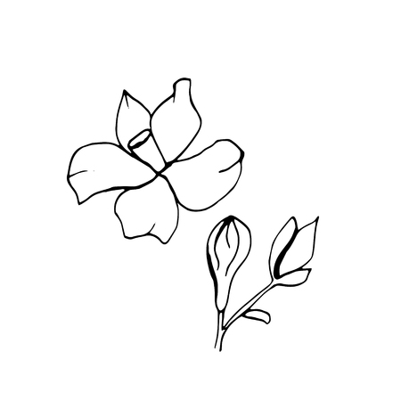Graphic sketches branches Neroli. Illustration for greeting cards and other printing and web projects.