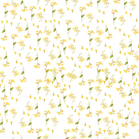 Seamless pattern of watercolor illustration of brassica napus on white. Background for greeting cards, invitations, and other printing projects 免版税图像