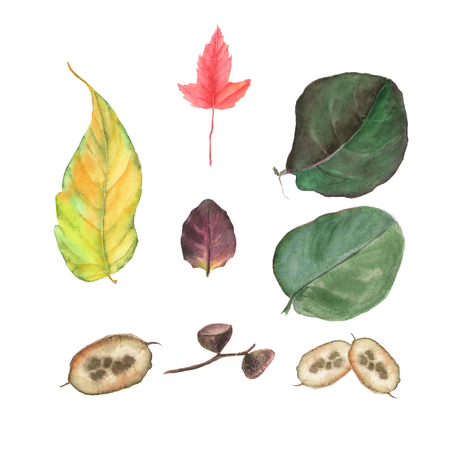 Watercolor hand painted set with leaves and seeds. Floral illustration isolated on white background