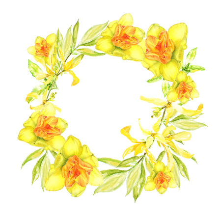 Easter wreath with yellow forsythia and yellow narcissus. Square border. Watercolor illustration on white background Imagens