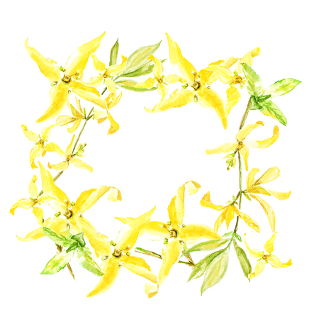 Easter wreath with yellow forsythia. Square border. Watercolor illustration on white background Imagens