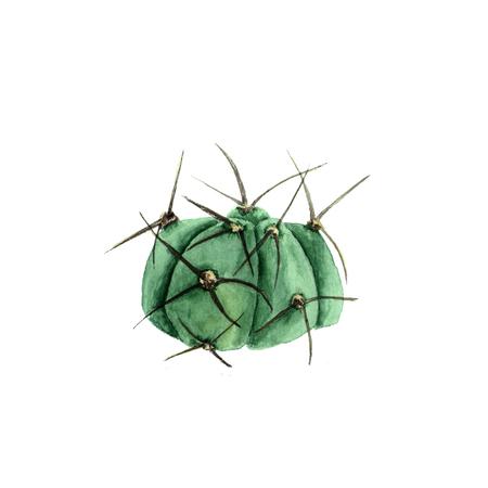 Tropical plant cactus gymnocalycium. Botanical watercolor illustration of succulent on white background Imagens