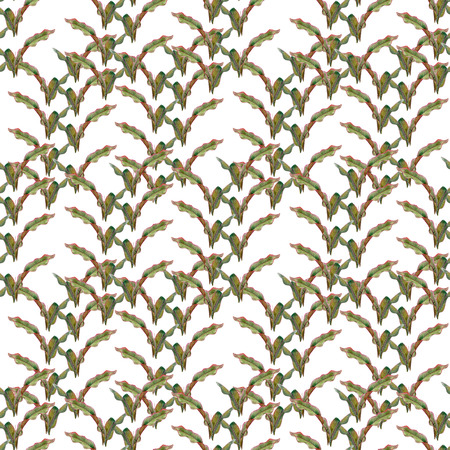 Green leaves. Tropical plant banana leaf. Watercolor drawing. Hand drawn floral. Seamless pattern on white background