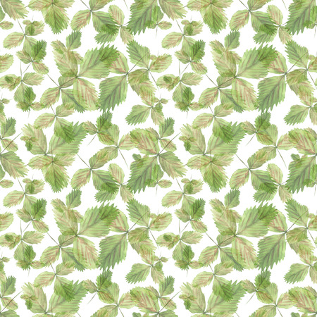 Watercolor seamless pattern with illustration of green strawberry leaves on white background Imagens