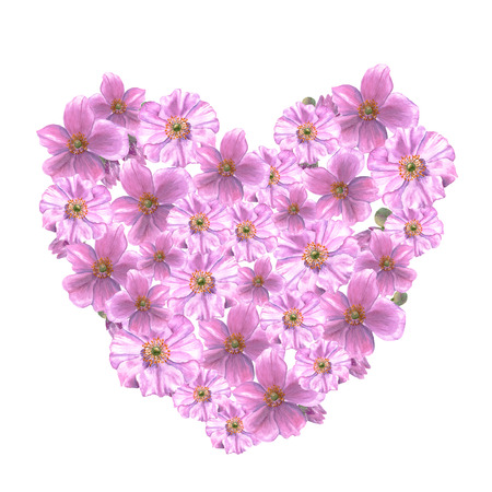 Pink anemone flowers and buds in heart form. Watercolor illustration on white background Imagens