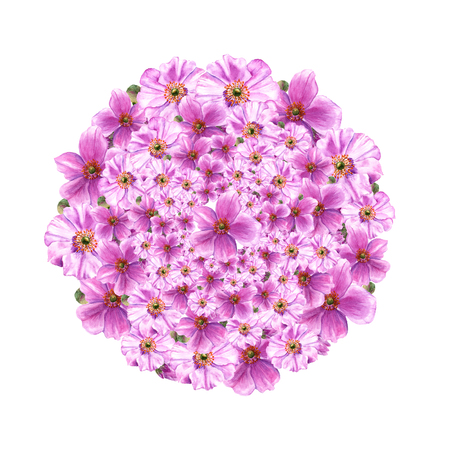 Pink anemone flowers and buds in circle. Watercolor illustration on white background Imagens