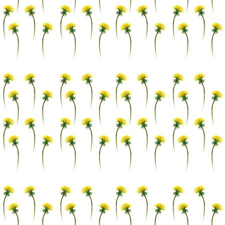 Watercolor dandelions on white . Seamless pattern with blooming dandelions. Botanical wallpaper on white background