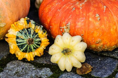 Display of pumpkins in garden on stone pavement