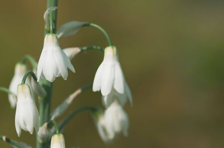 White flowers backlit on sunshine . Stock photo with shallow and soft blurred desaturated background