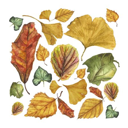Watercolor vector set of autumn leaves. Ginkgo, birch, ivy, begonia physalis and other