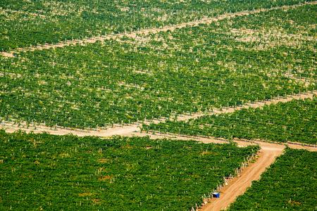 Aerial top view on extensive green vineyards background Reklamní fotografie