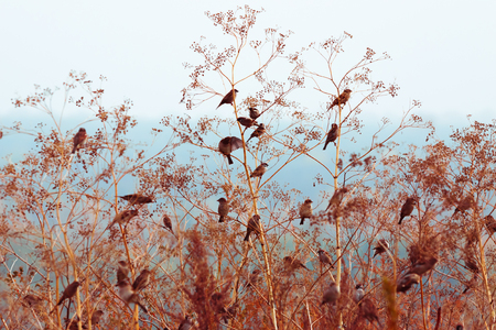 Sparrows are sitting on the branches of a bush in autumn color background