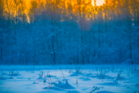 Winter blurred sunset background in a snowy forest with tiny grass in focus, out of snow in foreground