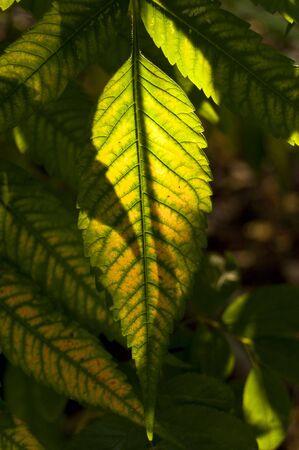 Autumn green leaf Stock Photo