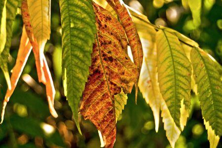Autumn tree leafs Stock Photo
