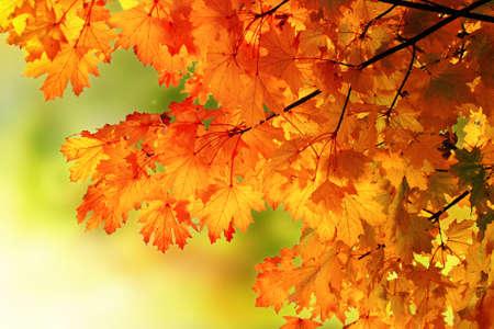 Abstract autumn park