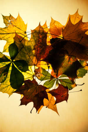 autumn leaves composition Stock Photo
