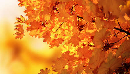 autumn maple park