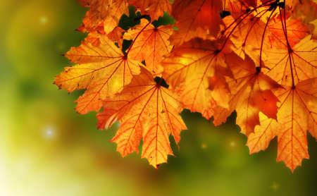 Fairy tale autumn maple tree night Stock Photo