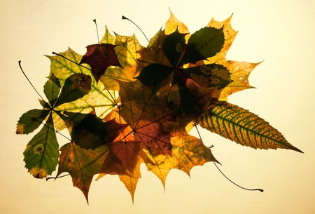 Isolated autumn leaves composition