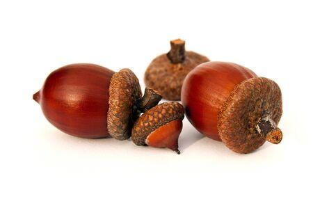Isolated clean acorns