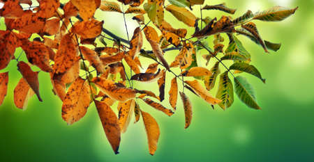 colorful autumn background Stock Photo