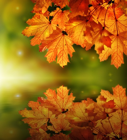Fairy tale autumn maple leaves reflection Stock Photo