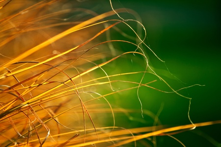 Autumn dry grass | nature photography Stock Photo