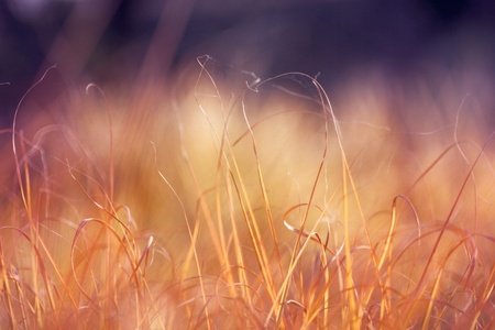 Abstrct dry grass