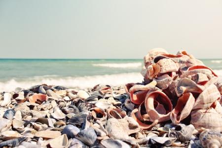 Bunch of sea shells Stock Photo