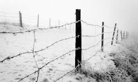 Foggy winter day with wired fence Stock Photo