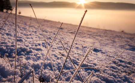 Frosty grass with snow asn sunset